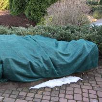 Zabezpieczenie roślin na zimę