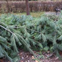 Zdj. nr 4Zabezpieczenie roślin na zimę