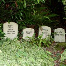 Zdj. nr 24;Cmentarz psów w ogrodzie - Irlandia